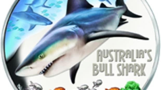 Australia Bull Shark