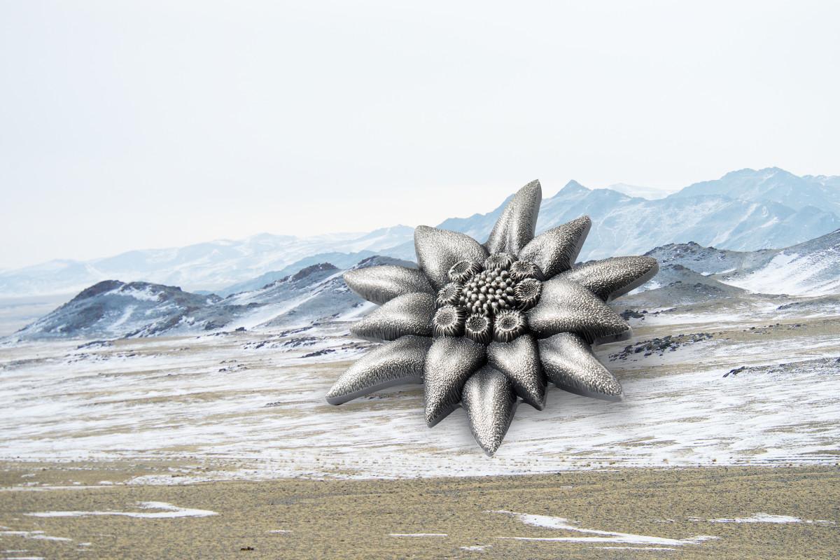 29044_Edelweiss - Mountain Star_s1