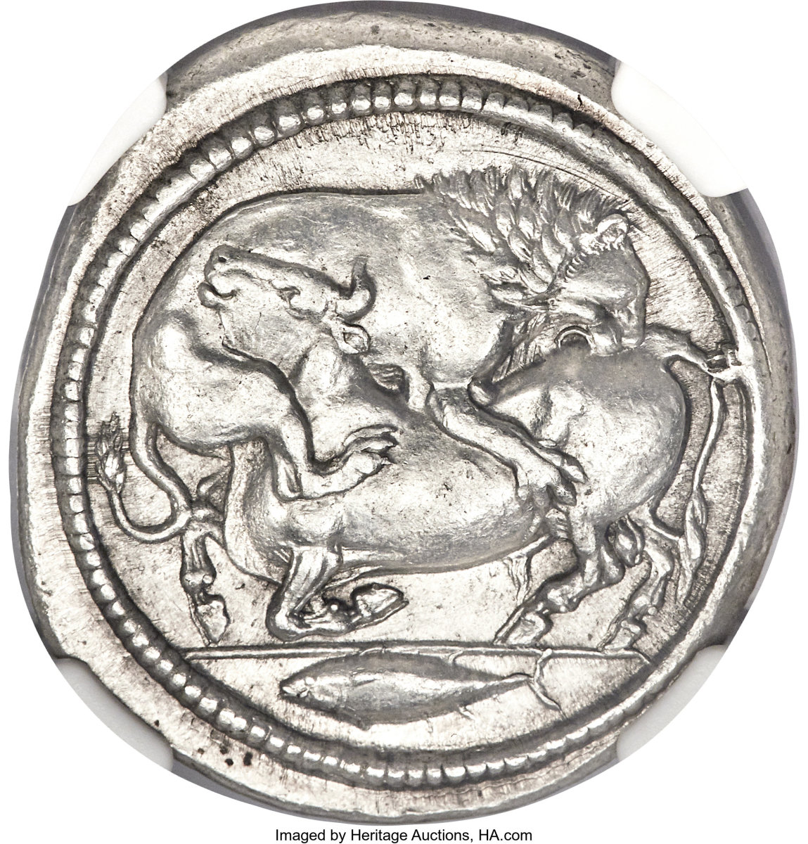 A lion and bull fight to the death on the obverse of this delightful Macedonian silver tetradrachm struck in Acanthus c. 470-430 BCE. It will go to the block with a graded of NGC Choice AU★ 5/5 - 4/5, Fine Style. (Image courtesy Heritage Auctions)