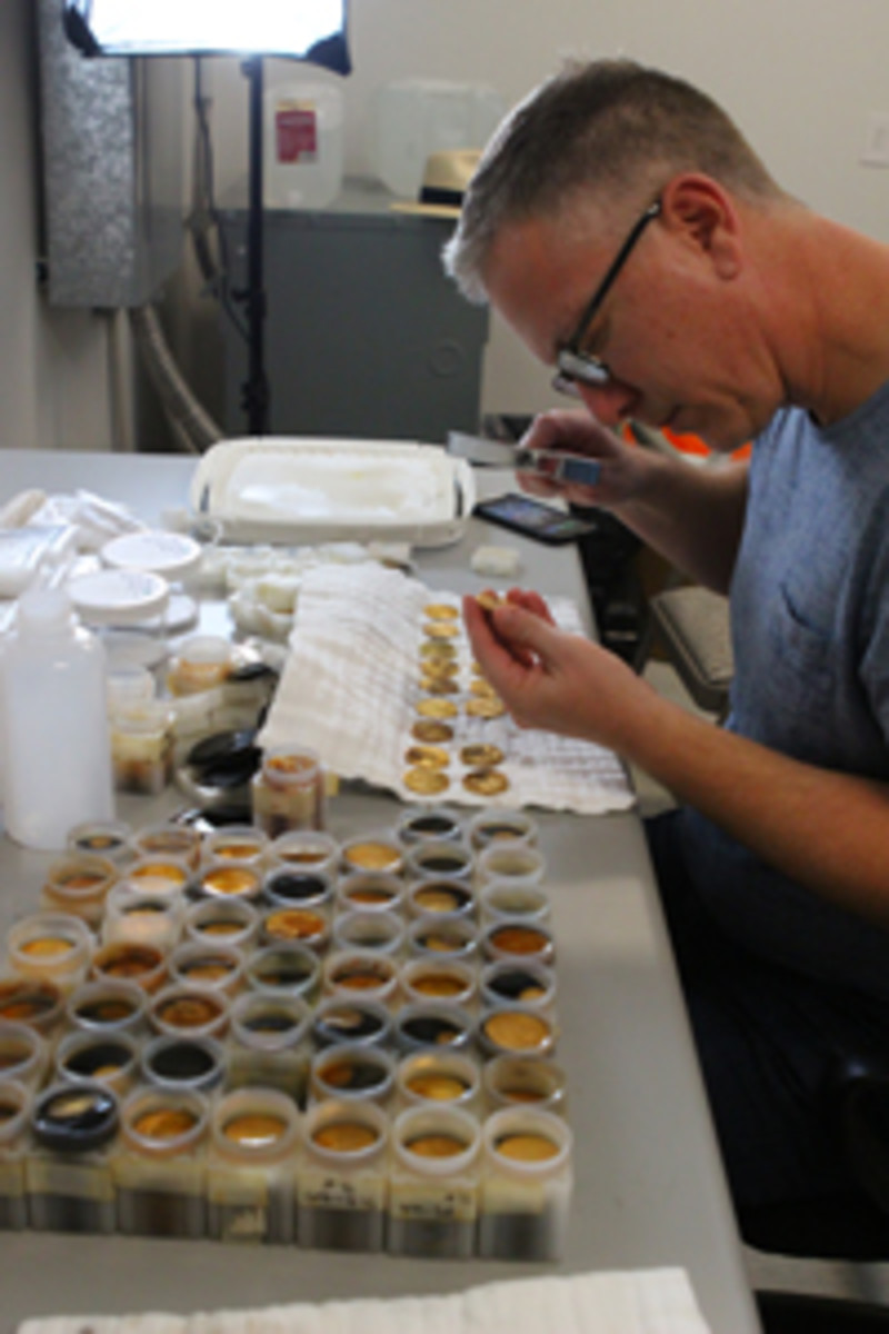 Dwight Manley examines coins from the S.S. Central America. (Christina Good/Professional Coin Grading Service photo)