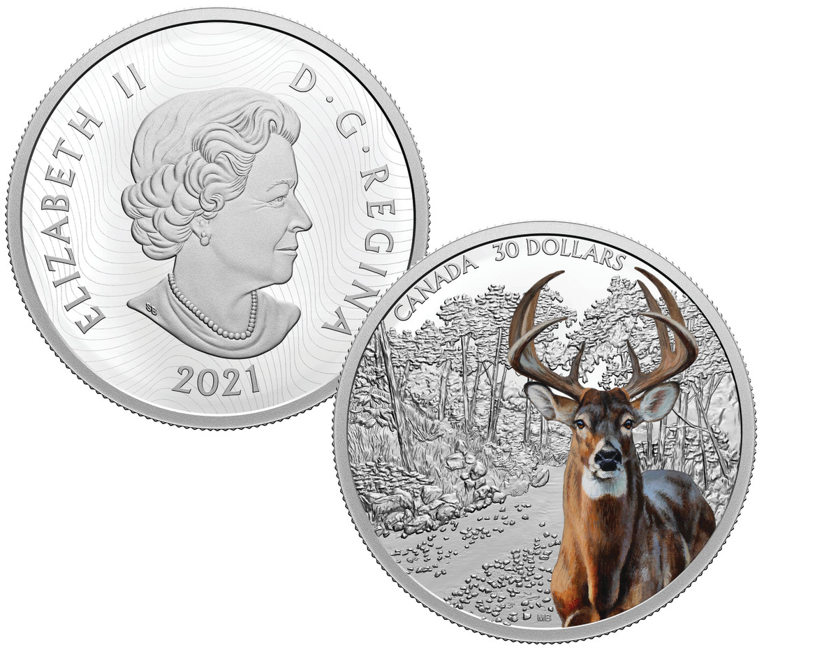 North America's abundant white-tailed deer is viewed here in its natural habitat. The detailed color of the deer is astoundingly accurate and the animal's dead-on stare is quite disarming.